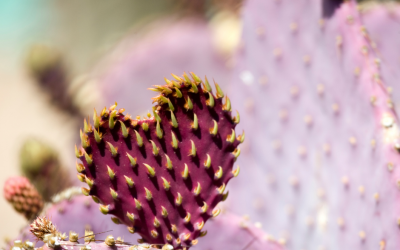 How To Love 'Prickly' People